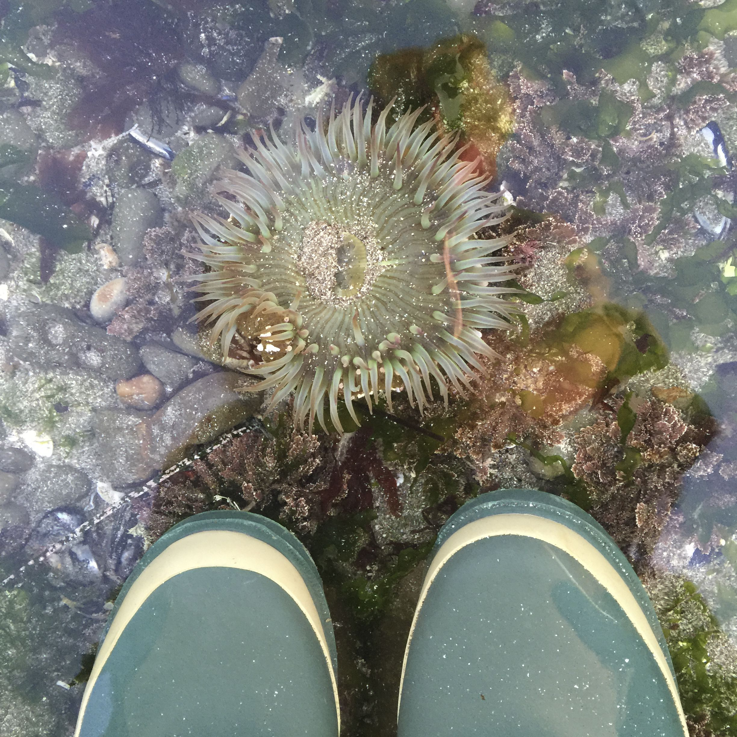 tide pool, rubber boots