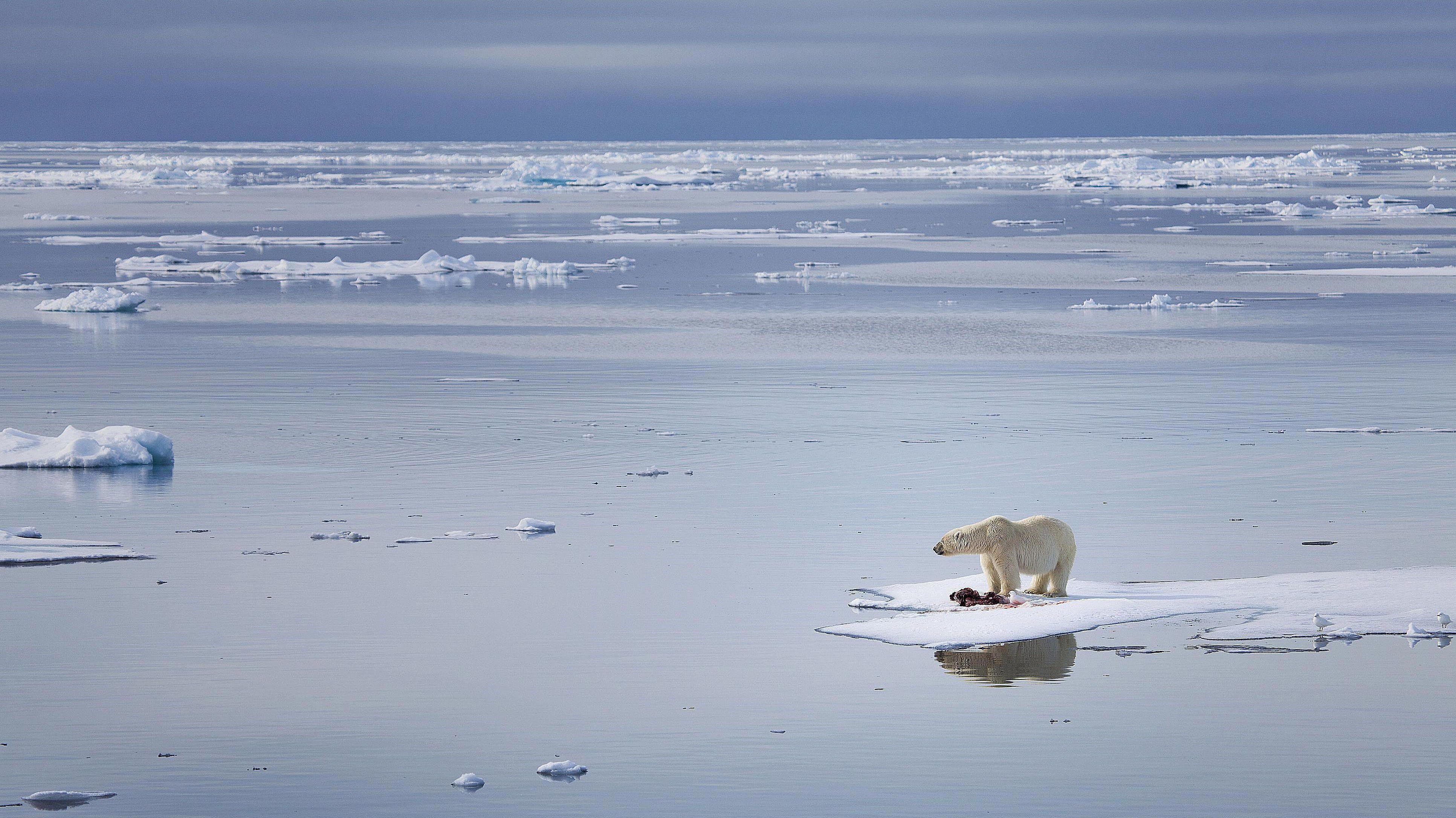 Disadvantages vs  Advantages of Global Warming
