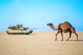 Camel and tank in the desert