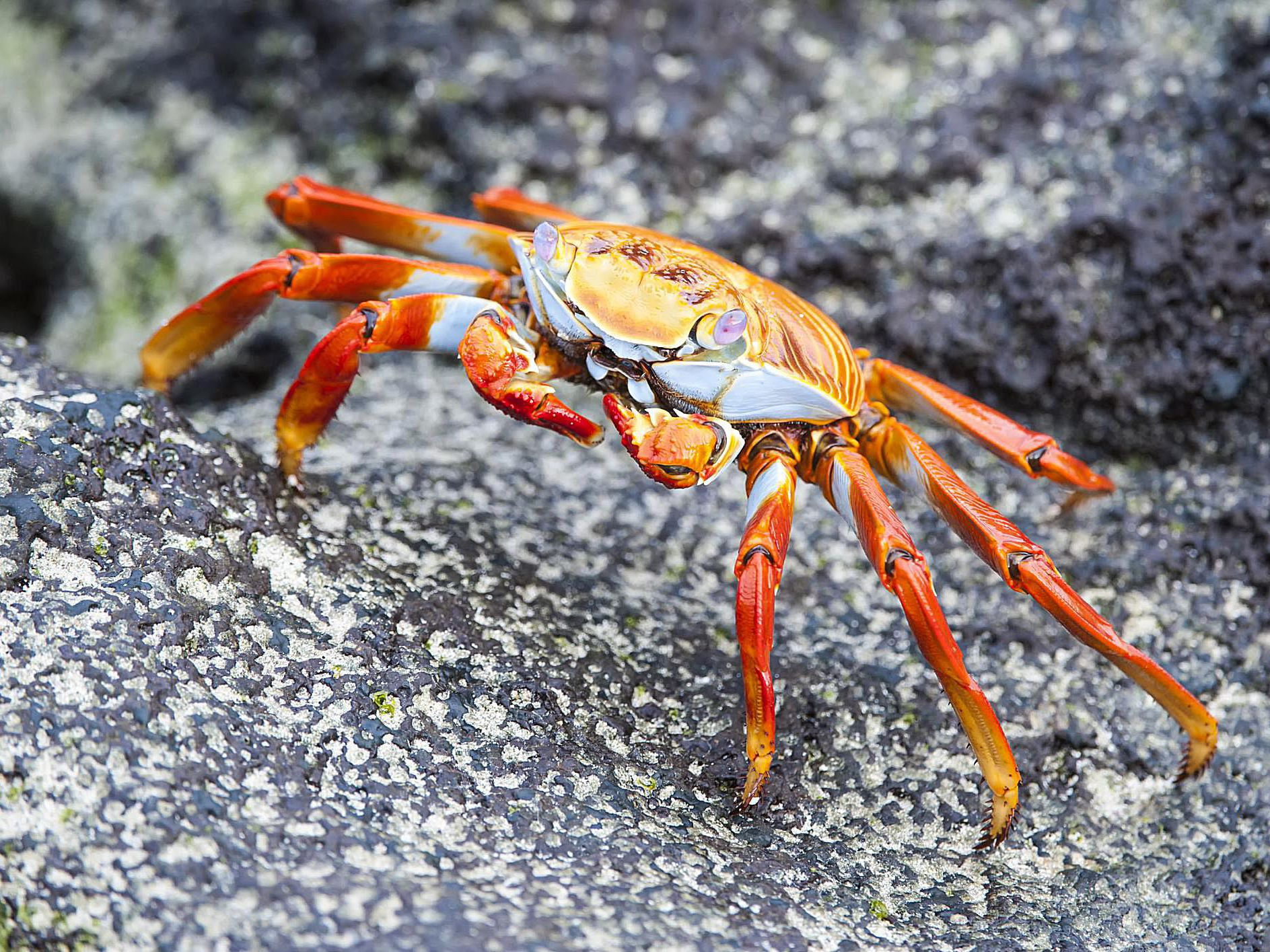 What Is a Crustacean - Information on Crustaceans