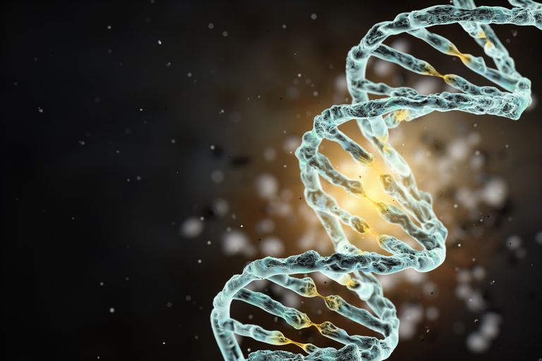 Dna definition and structure malvernweather Images