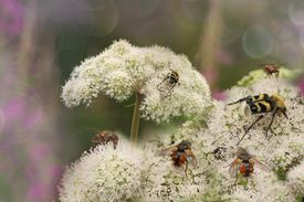 Close up of insects on flower blossoms.