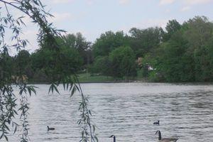 Lake Springfield near the University of Illinois at Springfield campus