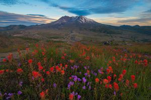 Mount St. Helens Sunset With Wildflowers