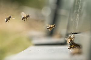 Close-Up Of Honey Bees Outdoors
