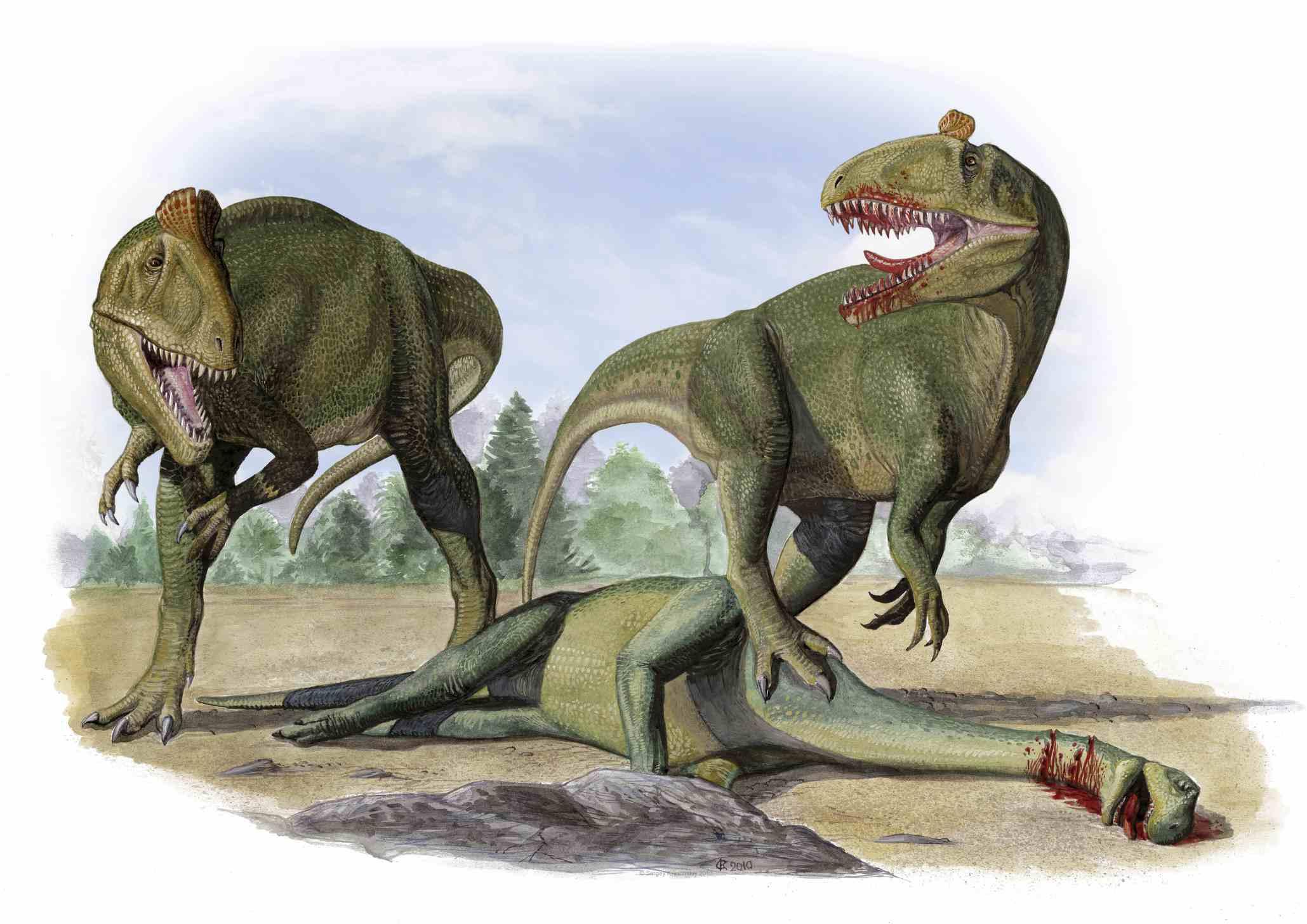 Cryolophosaurus ellioti dinosaurs over the dead body of an prosauropod dinosaur