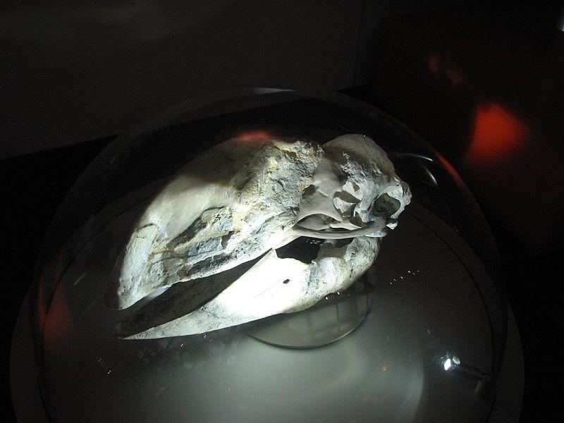 bullockornis demon duck doom