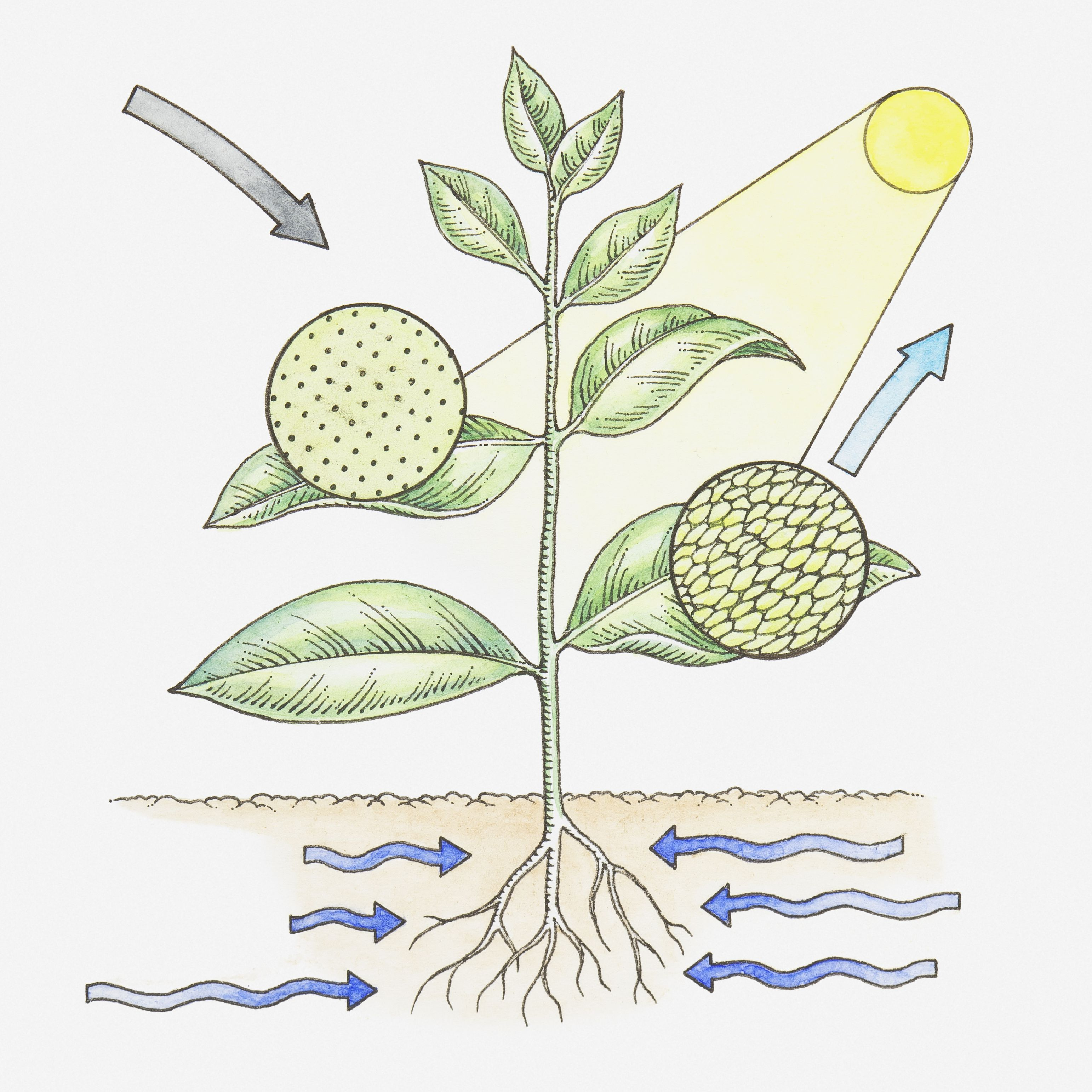 Photosynthesis Study Guide Key Concepts