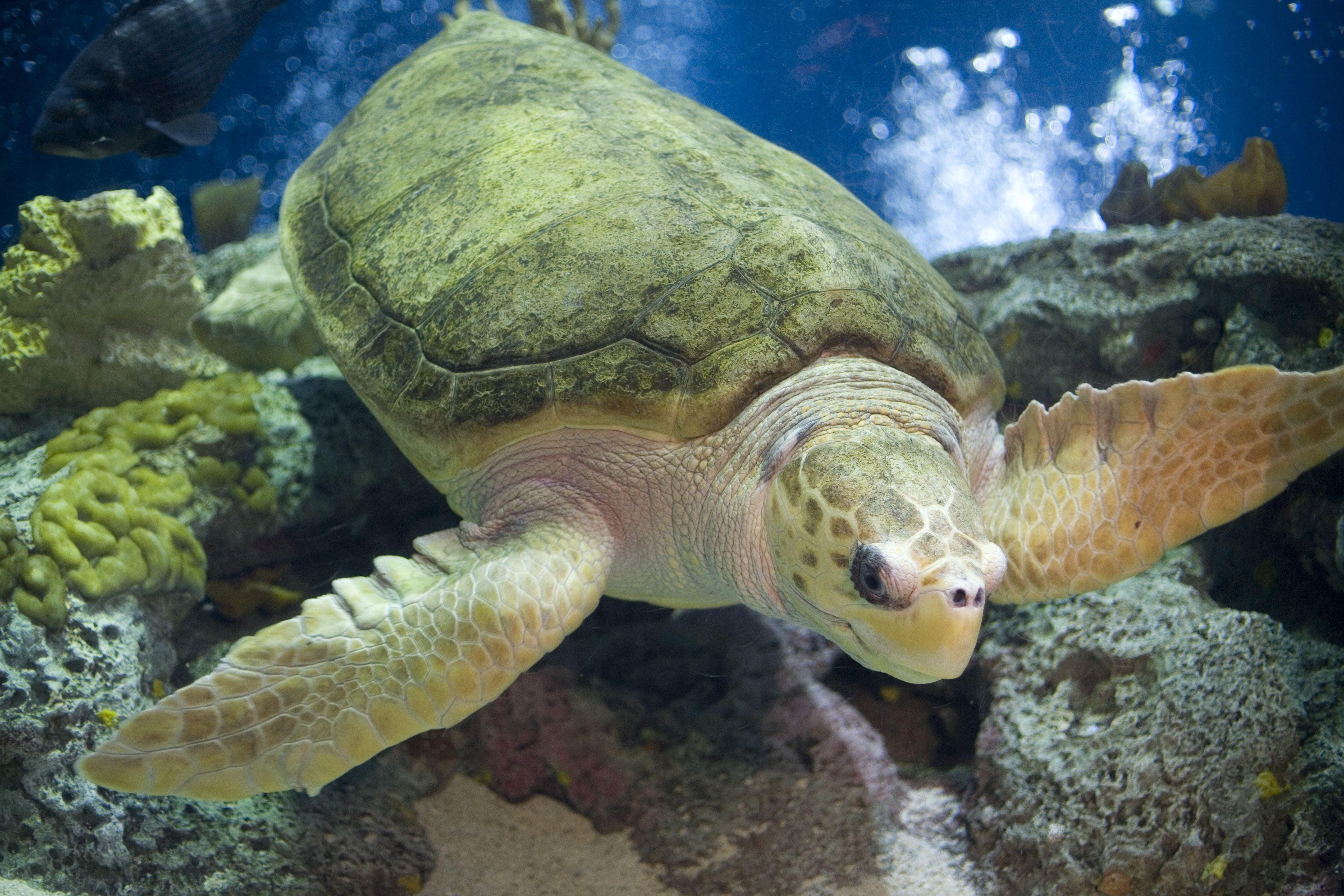 cum a scăzut țestoasa în greutate