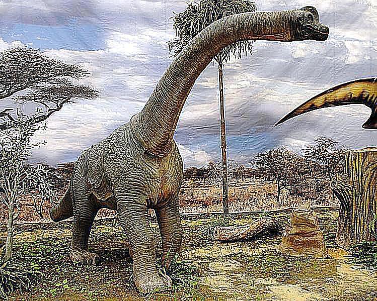 brachiosaurus the giraffe like dinosaur
