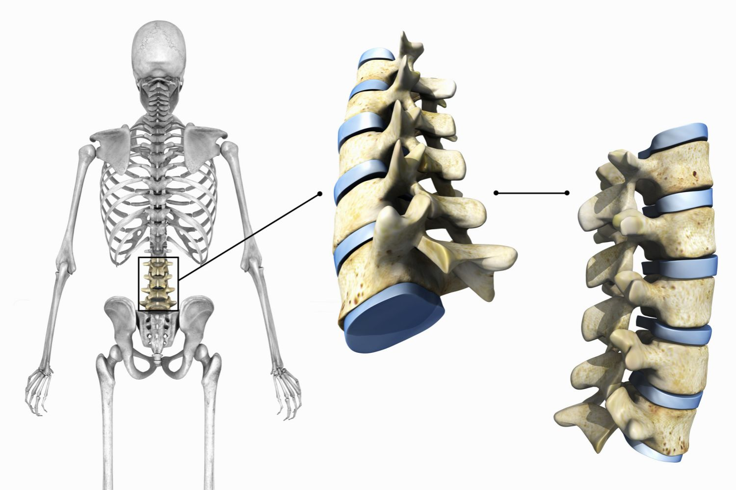 Diagram showing lumbar vertebrae and joints on a white background.