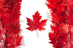 Red, wet maple leaves arranged to make a Canadian flag