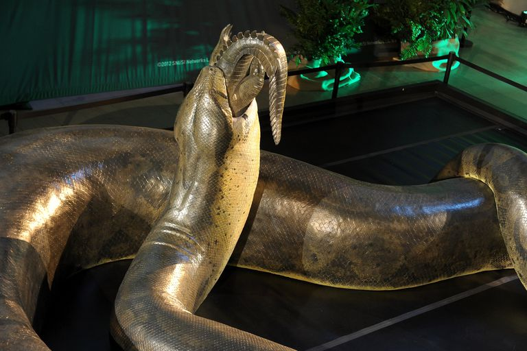 A golden replica of titanoboa devouring a gator