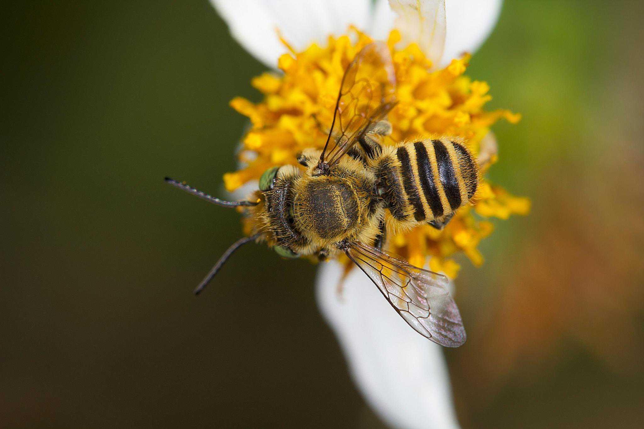 орех можно мед пчел земляных фото практикующих архитекторов