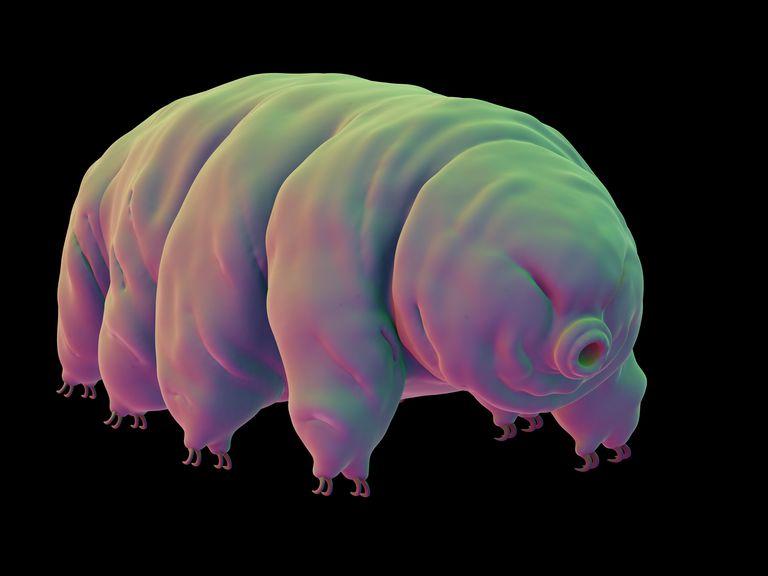 the 31 types of invertebrates