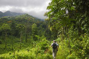 Honduras rainforest
