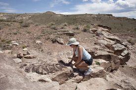 Woman inspects Diplodocus dinosaur skeleton western Colorado