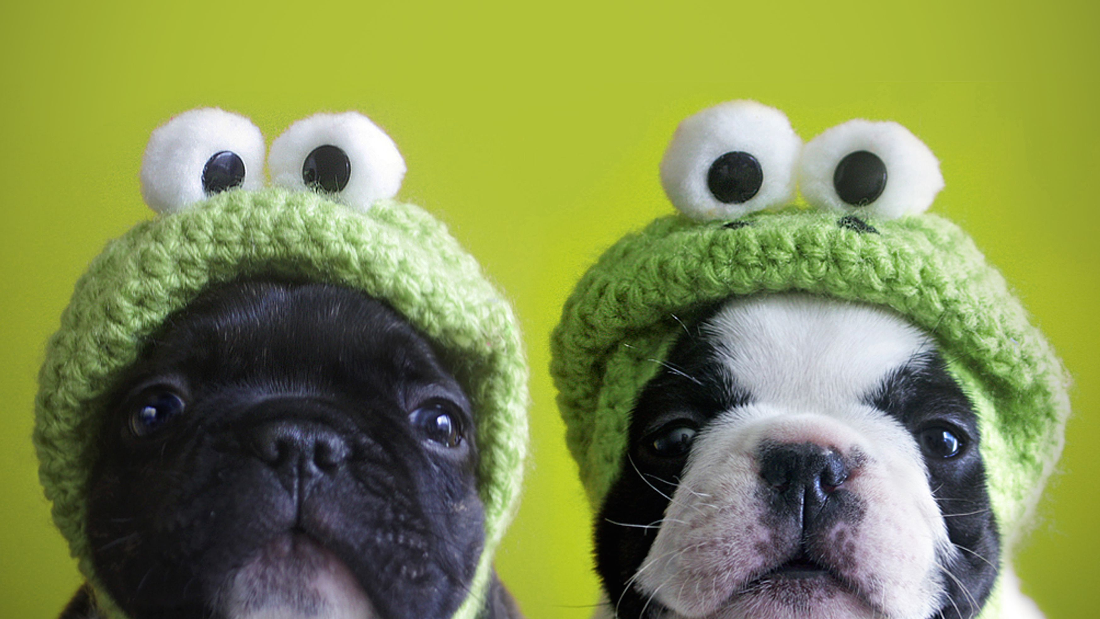 6 Idioms Using The Word For Dog In French