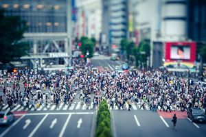 A crowded yet functioning city street demonstrates chaos theory
