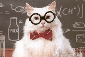 Chemistry Cat rules the world of chemistry memes.