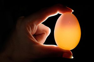 Egg that has been soaked in vinegar, being held up to a light