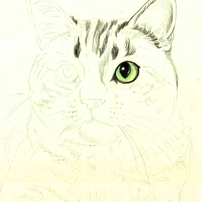 How To Draw A Cat In Colored Pencil
