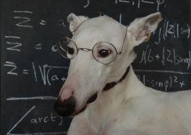 Dogs are intelligent animals.