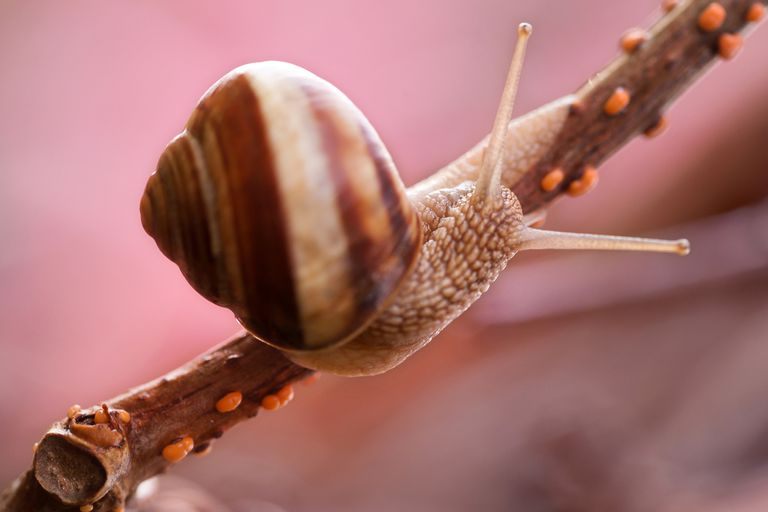 Snail on a branch.