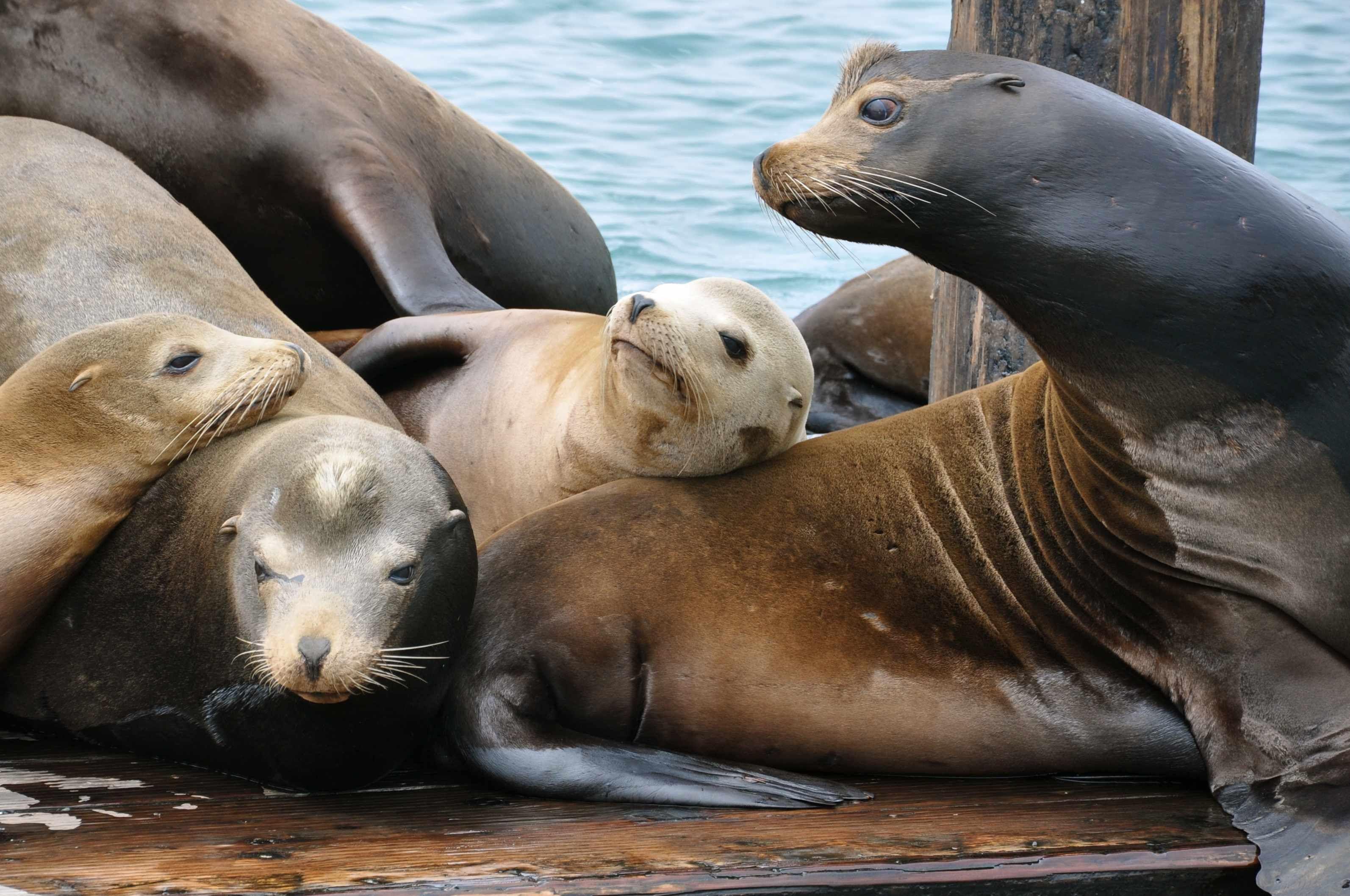 Sea Lions in Morro Bay, California