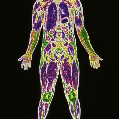 Elements in the Human Body and What They Do