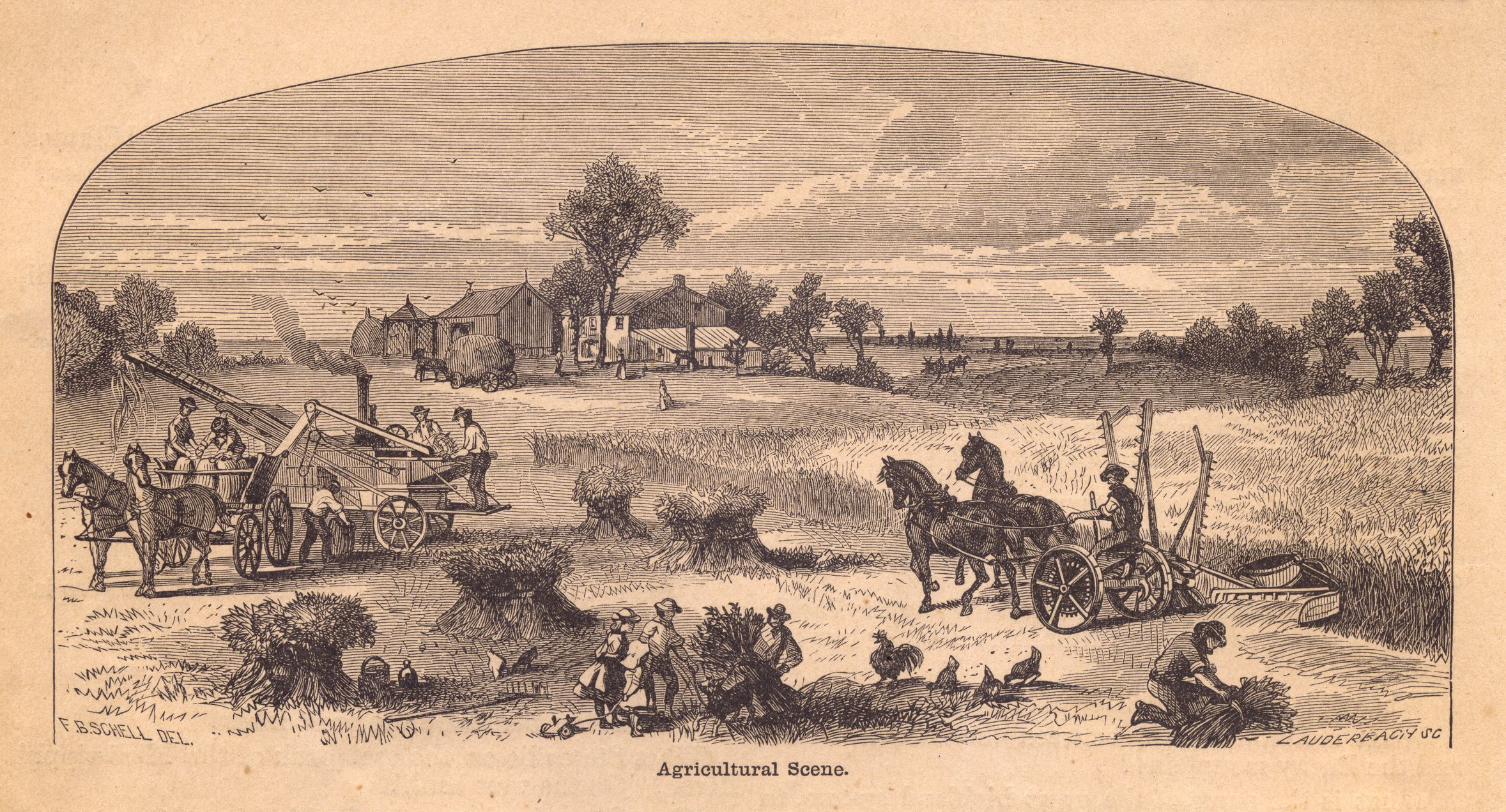 Old, Black and White Illustration of Agricultural Scene, From 1800's