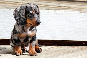 Small spotted puppy sitting on wood