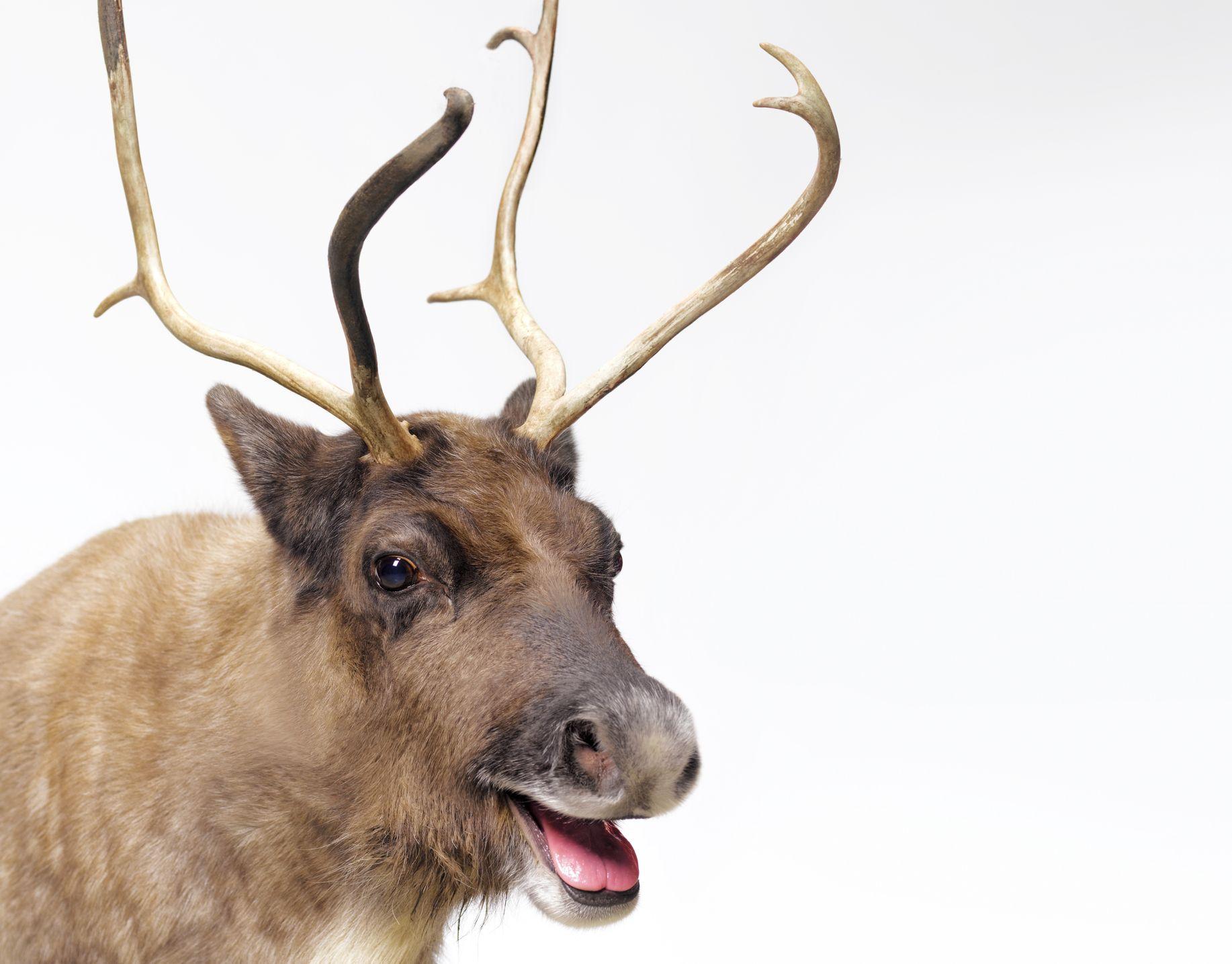 Donner Donder or Dunder Santas Reindeers Name Explained