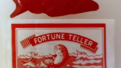 How Does the Fortune Teller Miracle Fish Work?