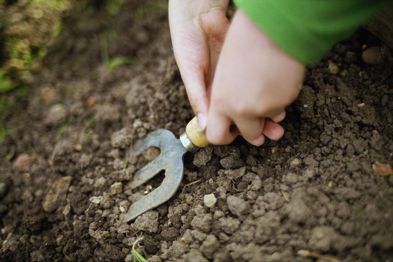 Hands digging with garden fork