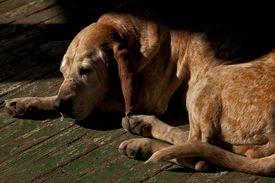 A dog sleeping on a hot porch