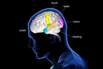 Image result for synesthesia in the brain