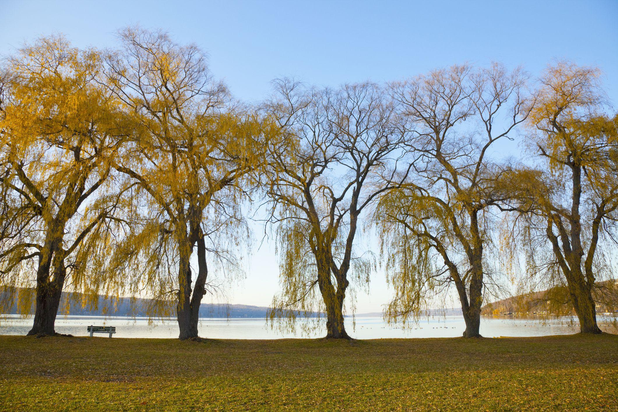 Fall Scene at Cayuga Lake