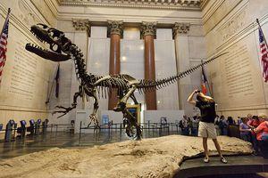 A skeleton of an Allosaurus