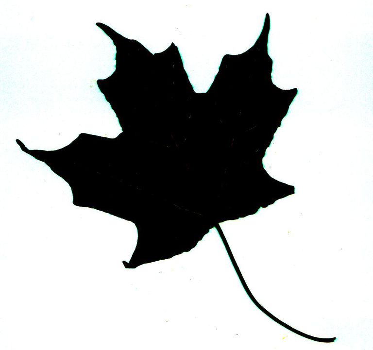 Identify A Tree With Leaf Silhouettes