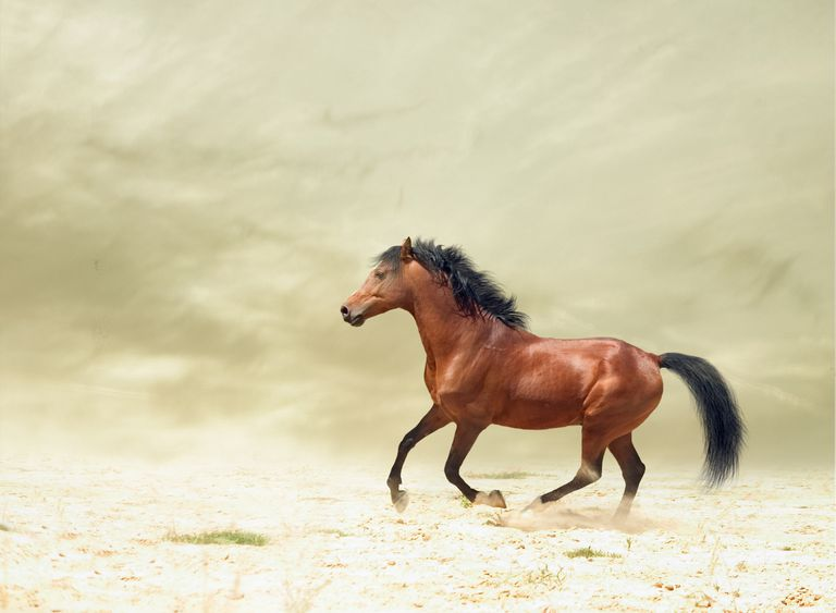 Famous Chinese Horse Proverb Explained Sai Weng Lost His Horse