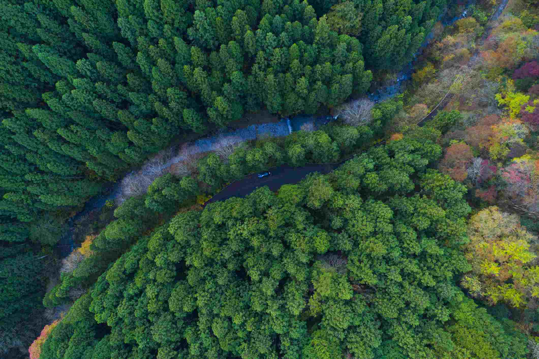 forest from bird's eye view.