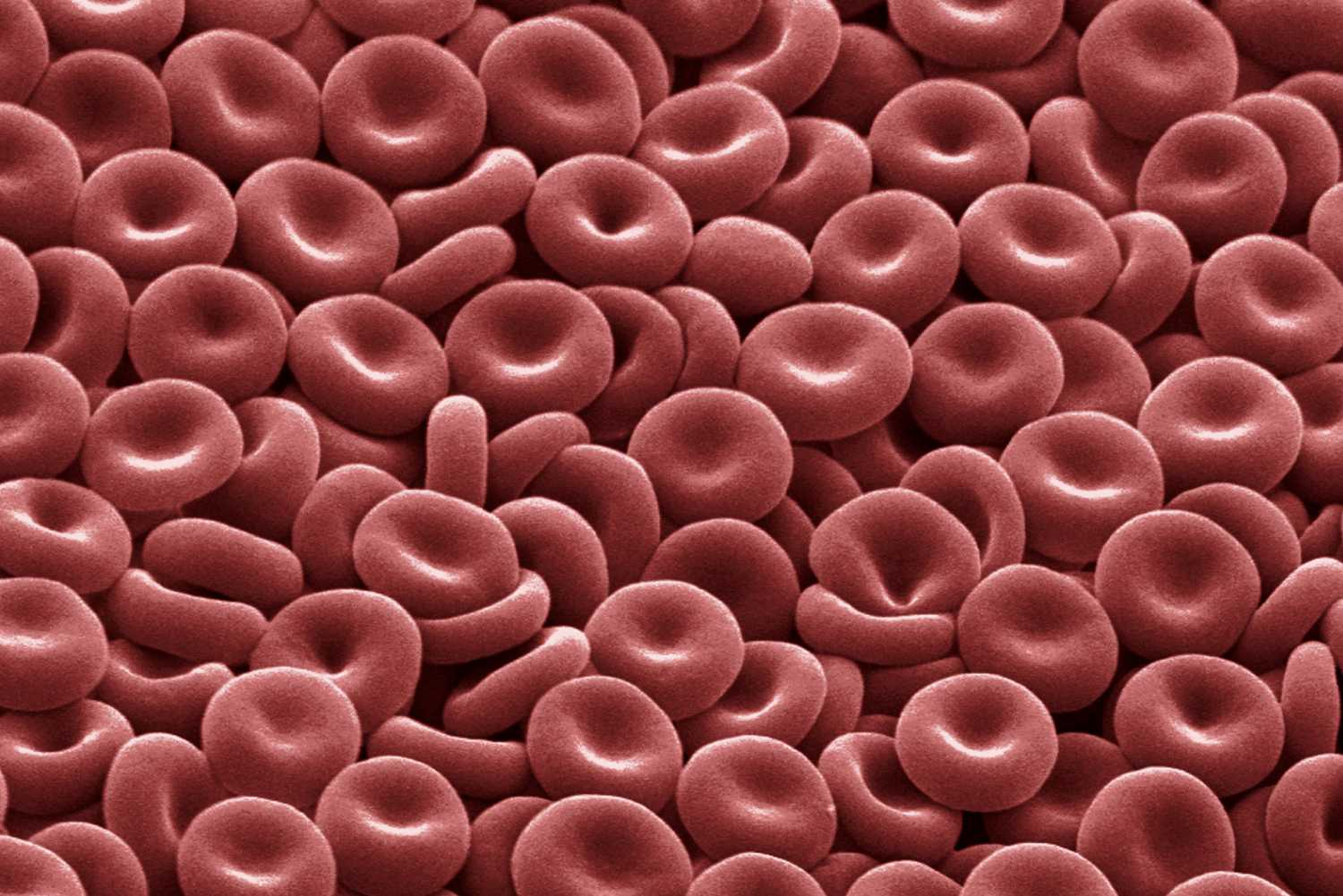 Red Blood Cells Function And Structure