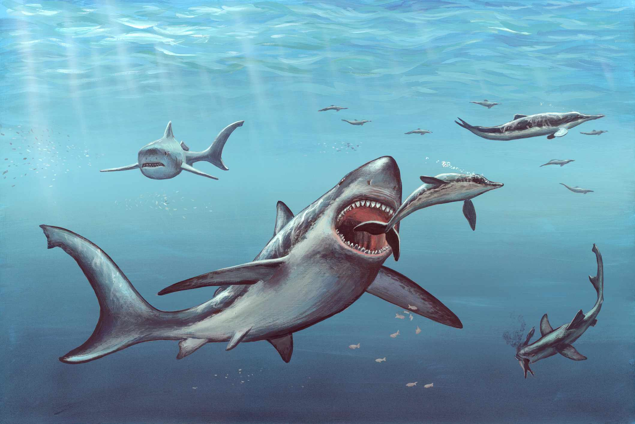Megalodon Prehistoric Shark Artwork