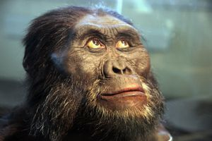 Australopithecus afarensis adult male - head model - Smithsonian Museum of Natural History - 2012-05-17