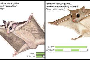 Convergent evolution example
