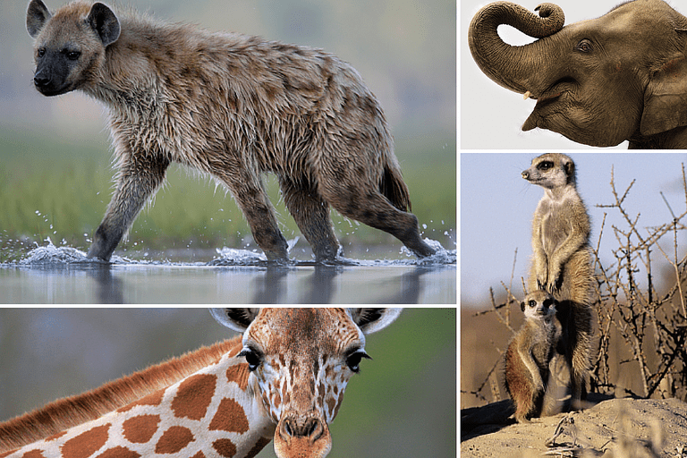 Photos of Animals in the Savanna Regions