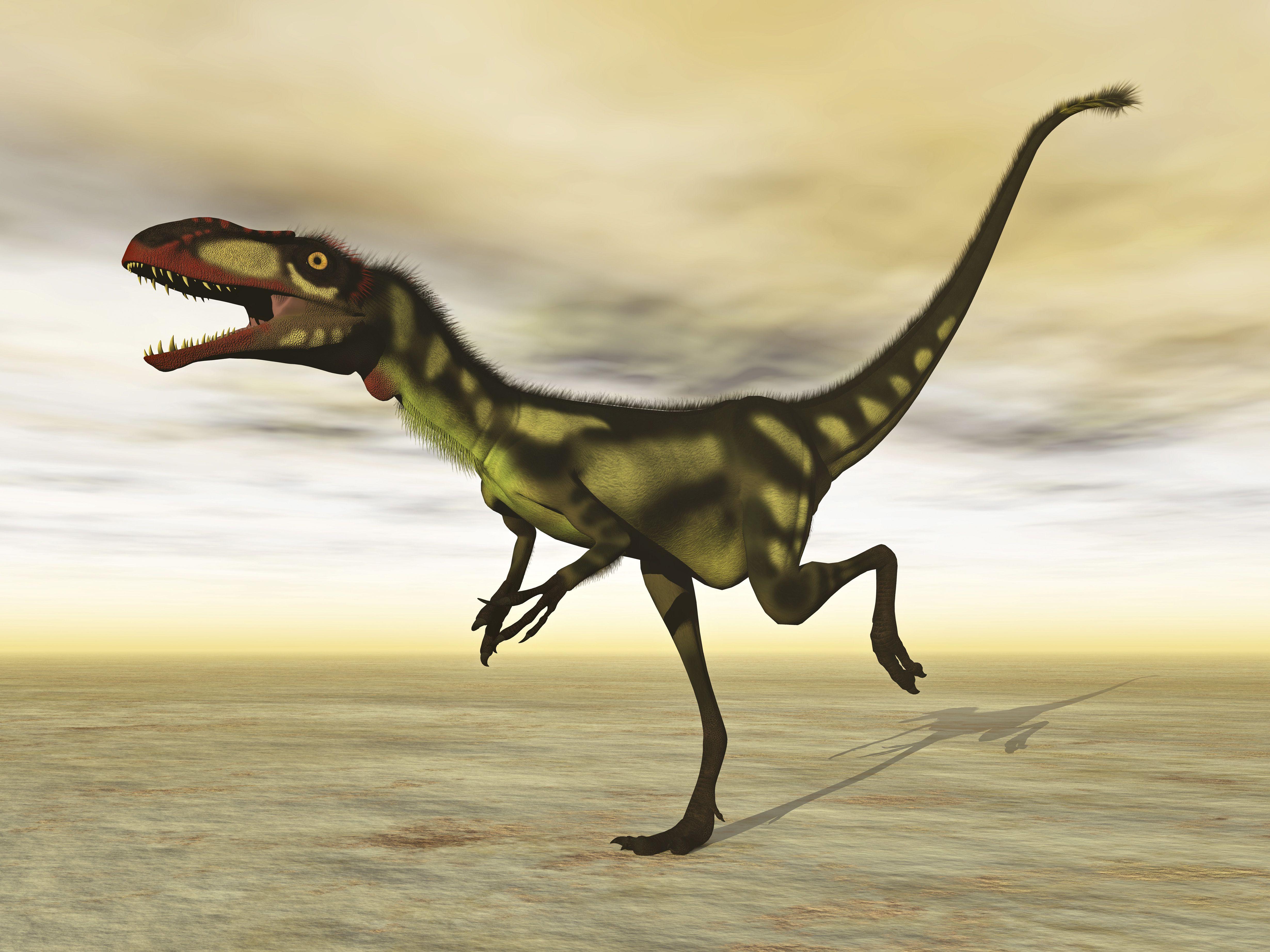 Dilong dinosaur in the desert
