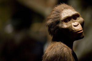 'Lucy' Exhibit To Open In Houston Amid Protests