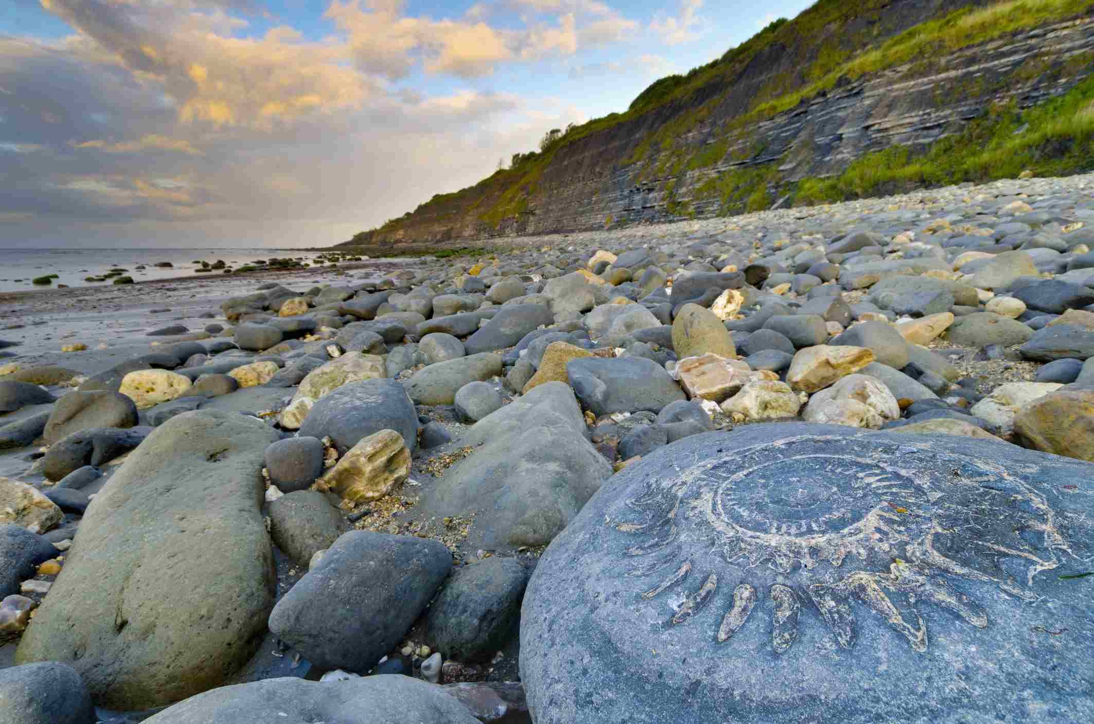 UK, England, Dorset, Lyme Regis, Monmouth Beach, Ammonite Pavement, Large ammonite fossil
